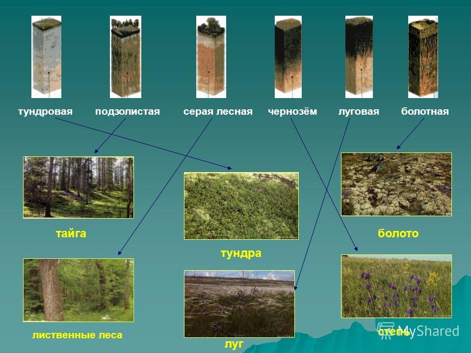 Типы почв тундровая тундровая подзолистая подзолистая серая лесная серая лесная чернозём чернозём луговая луговая болотная болотная