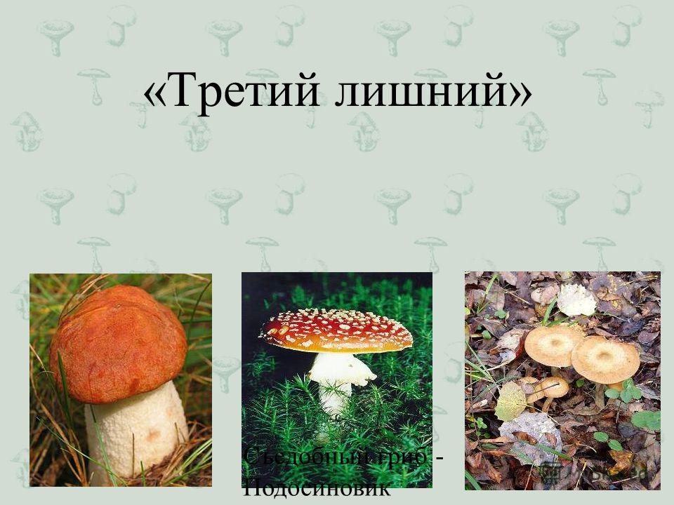 «Третий лишний» Съедобный гриб - Подосиновик