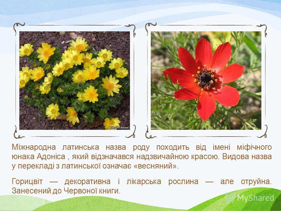 Горицвіт весняний Горицвіт весняний (Adonis vernalis) багаторічна рослина висотою 1040см. Цвіте в квітнітравні. Росте у степах, на степових схилах у лісостепу і степу, на яйлах в Криму. Зрідка трапляється на степових схилах в Прикарпатті, РозточчіОпі