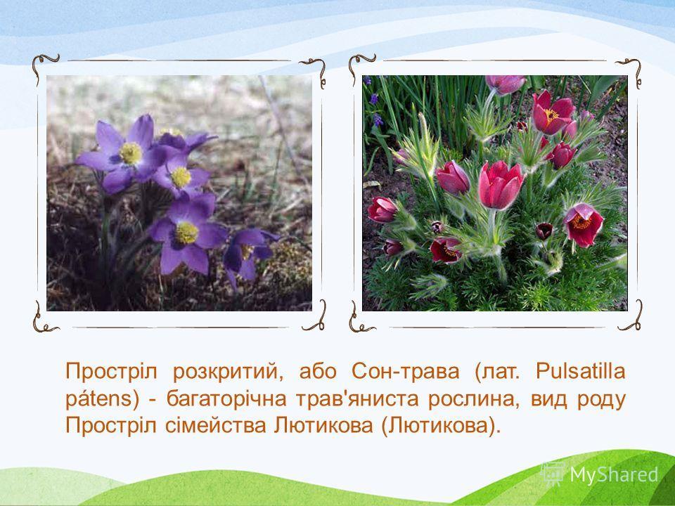 Підсні́жник білосні́жний, підсні́жник звича́йний, про́лісок білосні́жний (лат. Galanthus nivalis L.), багаторічна цибулинна рослина. Назва роду походить від грецьких слів, які в перекладі означають «молочно- квітковий» (колір квітів цієї рослини нага