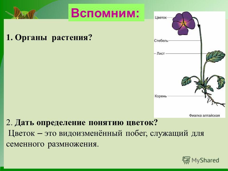 1. Органы растения? 2. Дать определение понятию цветок? Цветок – это видоизменённый побег, служащий для семенного размножения. Вспомним: