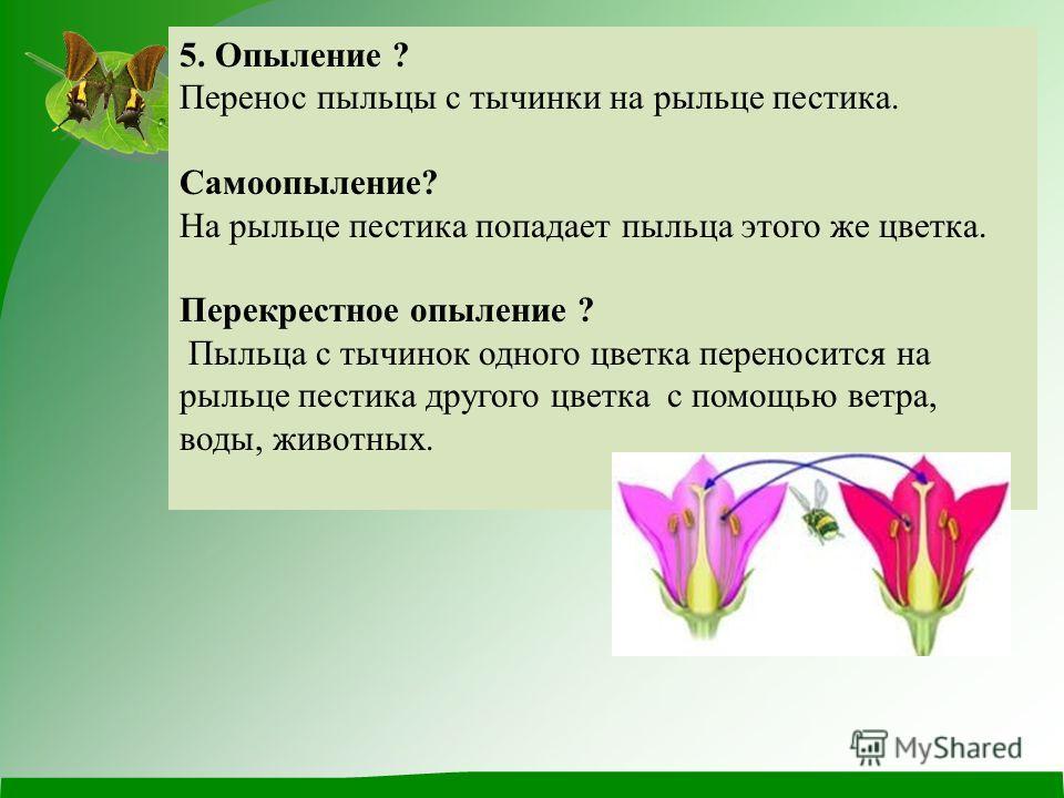 5. Опыление ? Перенос пыльцы с тычинки на рыльце пестика. Самоопыление? На рыльце пестика попадает пыльца этого же цветка. Перекрестное опыление ? Пыльца с тычинок одного цветка переносится на рыльце пестика другого цветка с помощью ветра, воды, живо