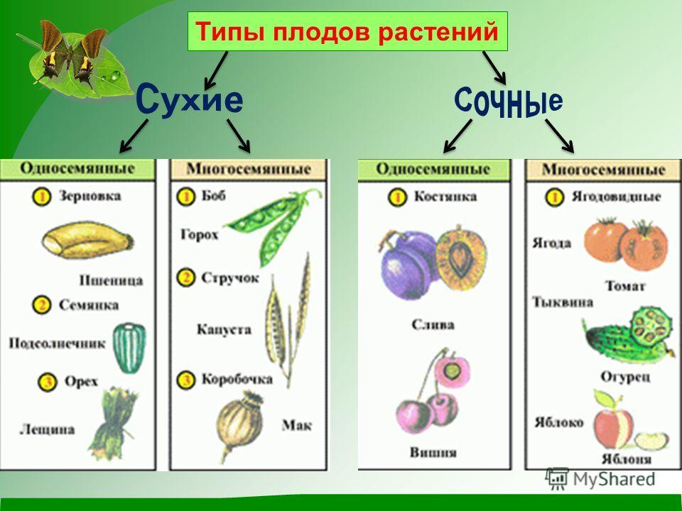 Типы плодов растений