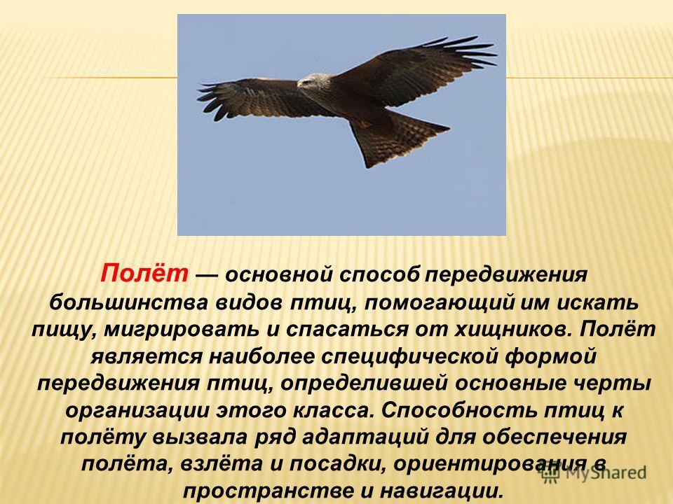 Почему птицы летают и не падают? Цель: 1.Выяснить, какие приспособления есть у птицы для полёта. Гипотеза: Для того, чтобы удерживаться в воздухе во время полёта птицы должны быть: -лёгкими; -иметь большую поверхность тела (помогают крылья и хвост).