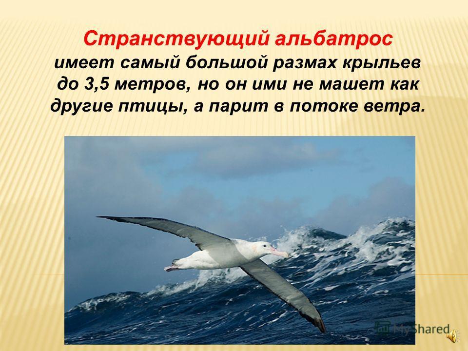 Крылья для парящего полёта Крылья для парящего полёта относительно широкие и характерны для больших сухопутных птиц, таких как орлы, грифы, пеликаны и аисты. Глубокие бороздки на концах крыльев между маховыми перьями уменьшают силу сопротивления возд
