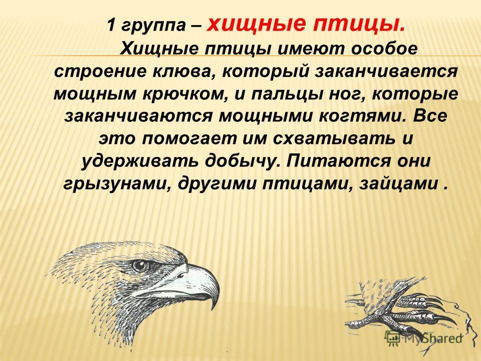 Угадай, чем питаются эти птицы? 1 2 3
