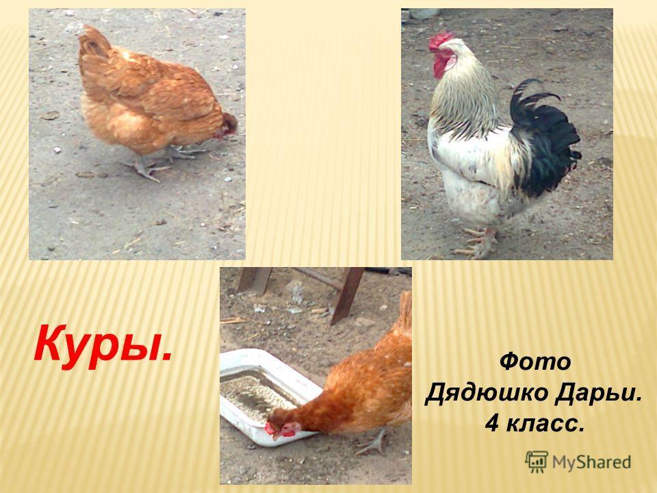 Фото Петуховой Алины. 4 класс. Утки и гуси.