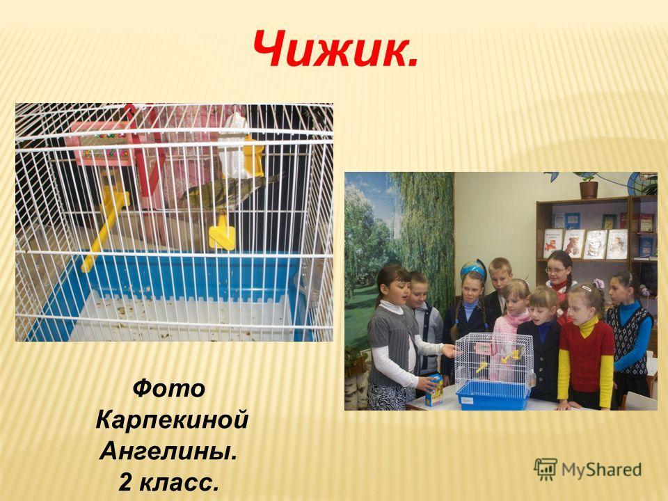 Куры. Фото Дядюшко Дарьи. 4 класс.