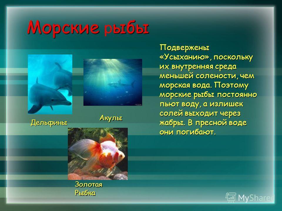 Морскиеыбы Морские р ыбы Подвержены «Усыханию», поскольку их внутренняя среда меньшей солености, чем морская вода. Поэтому морские рыбы постоянно пьют воду, а излишек солей выходит через жабры. В пресной воде они погибают. Дельфины Акулы Золотая Рыбк