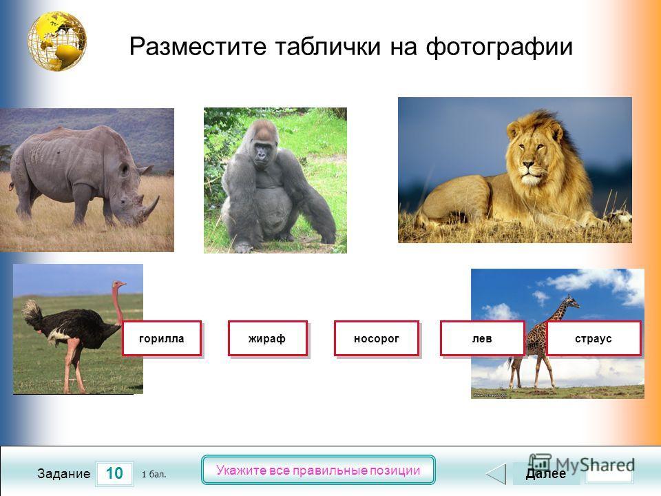 2 5 4 3 1 10 Задание Укажите все правильные позиции Разместите таблички на фотографии Далее 1 бал. носорог горилла жираф лев страус