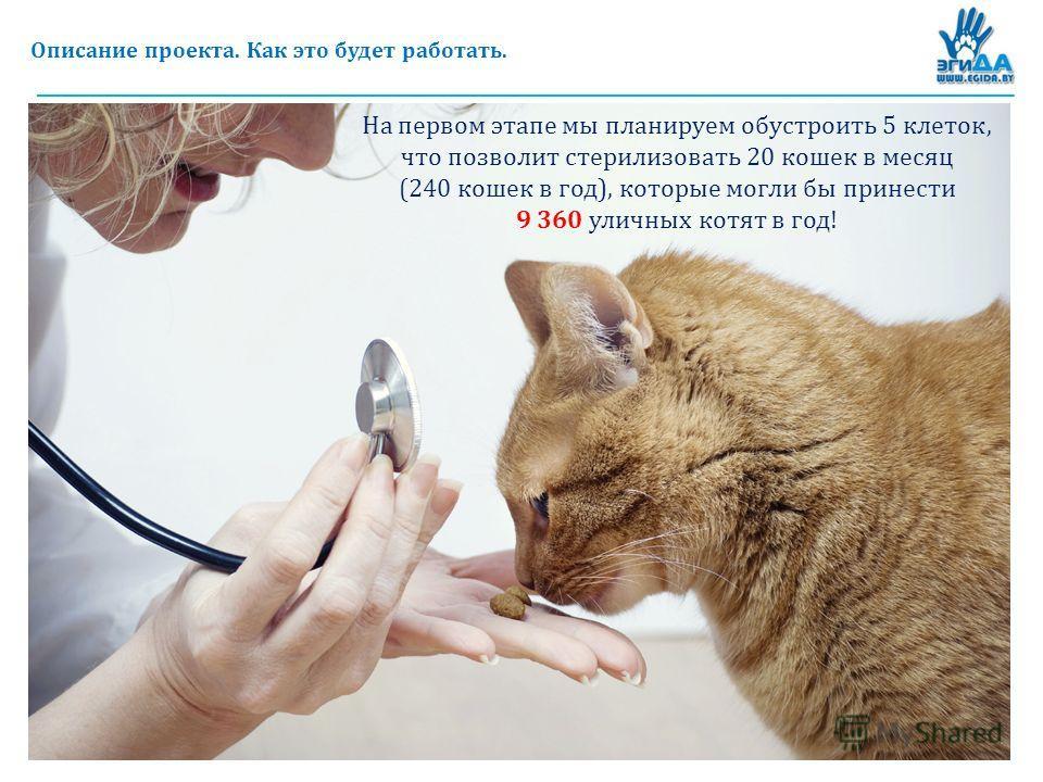 Описание проекта. Как это будет работать. На первом этапе мы планируем обустроить 5 клеток, что позволит стерилизовать 20 кошек в месяц (240 кошек в год), которые могли бы принести 9 360 уличных котят в год!