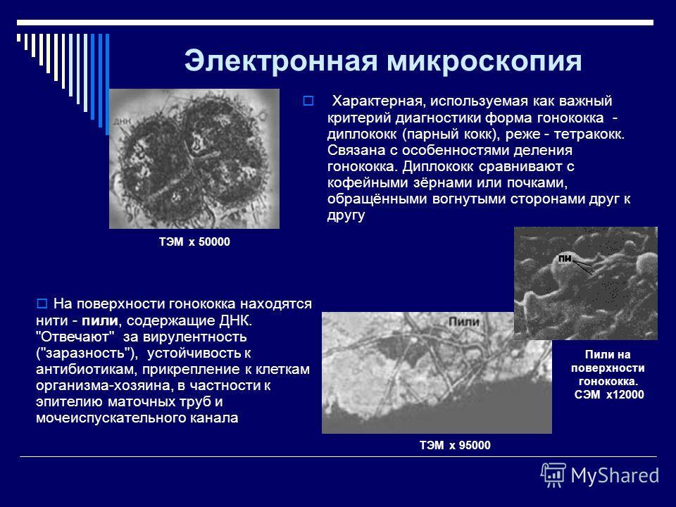 Электронная микроскопия Характерная, используемая как важный критерий диагностики форма гонококка - диплококк (парный кокк), реже - тетракокк. Связана с особенностями деления гонококка. Диплококк сравнивают с кофейными зёрнами или почками, обращённым