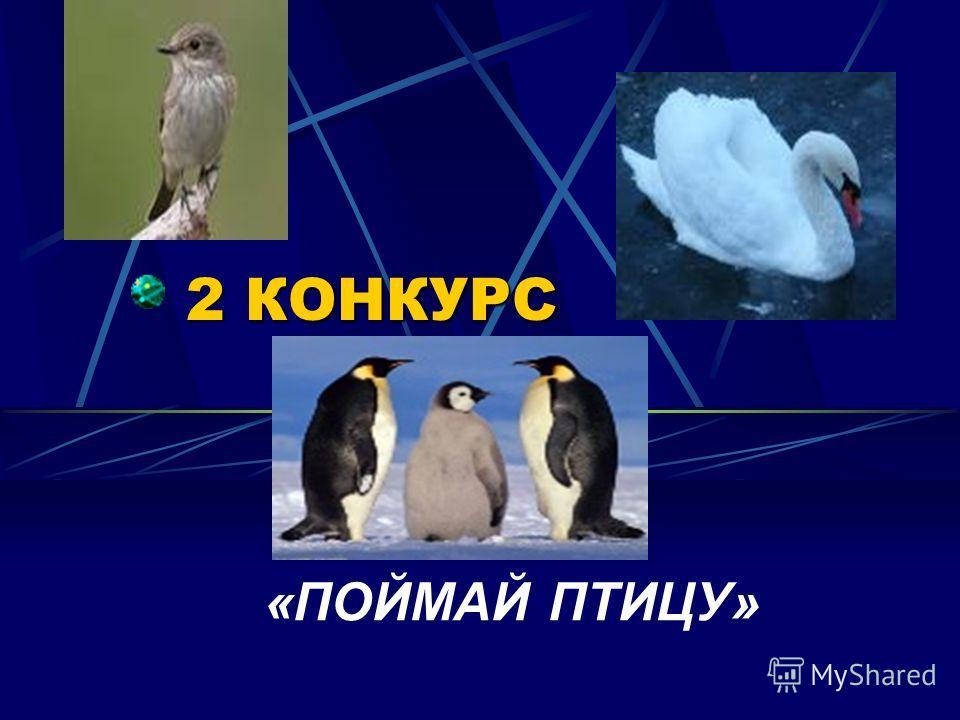 1 КОНКУРС «БЛИЦ – ТУРНИР»