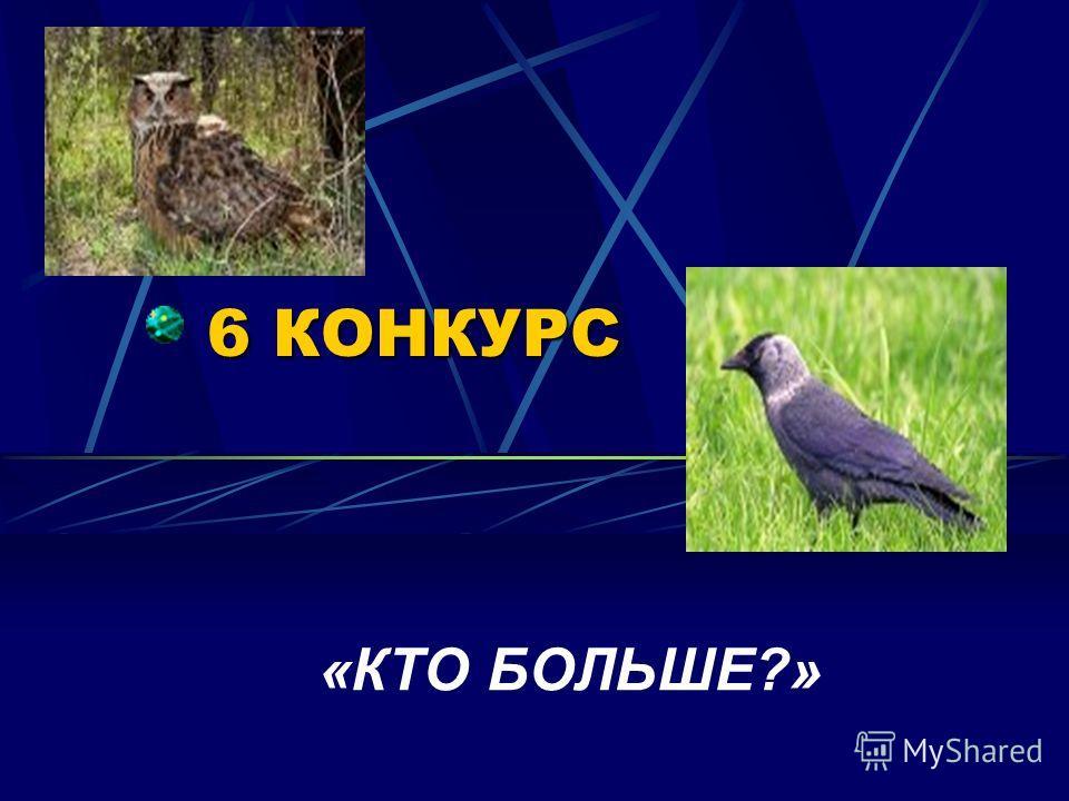 5 КОНКУРС КРОССВОРД