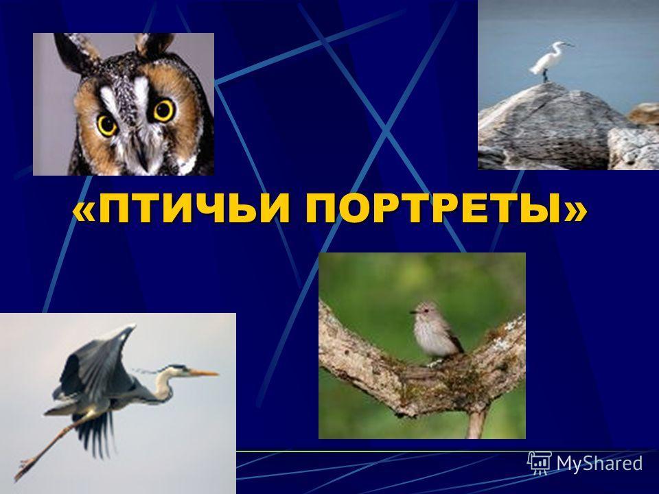 Учитель биологии Толкачева Ирина Александровна