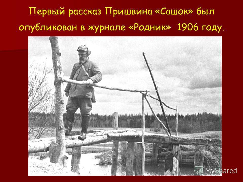 Первый рассказ Пришвина «Сашок» был опубликован в журнале «Родник» 1906 году.