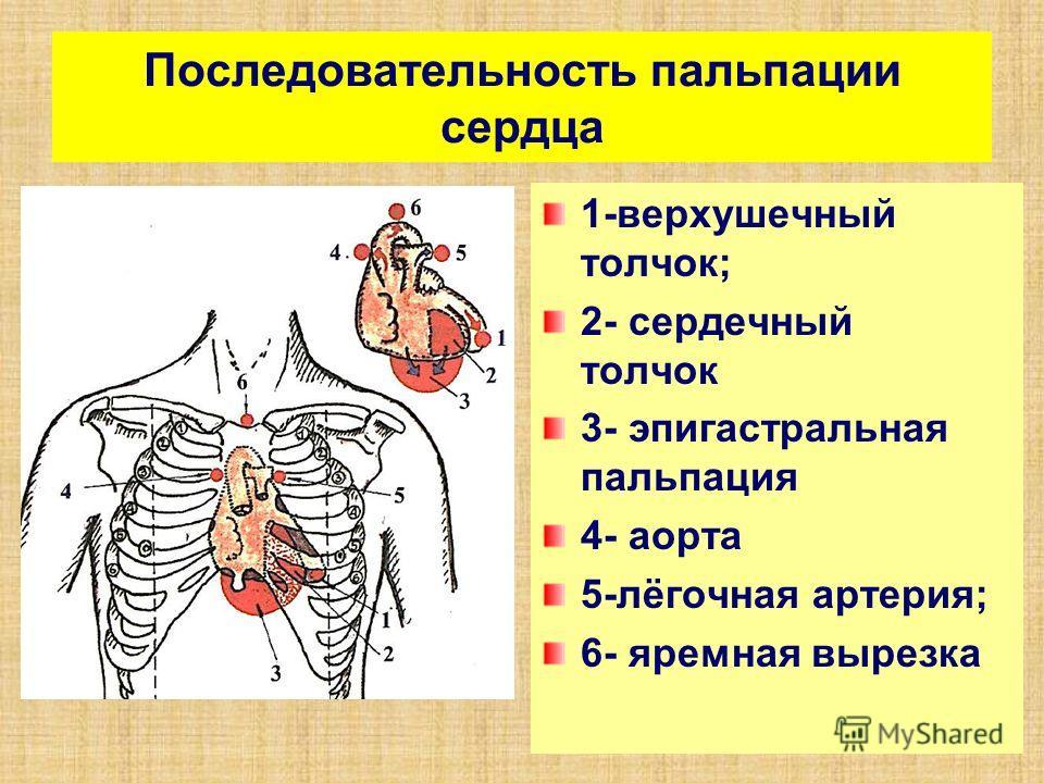 Последовательность пальпации сердца 1-верхушечный толчок; 2- сердечный толчок 3- эпигастральная пальпация 4- аорта 5-лёгочная артерия; 6- яремная вырезка