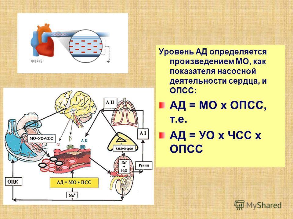 Уровень АД определяется произведением МО, как показателя насосной деятельности сердца, и ОПСС: АД = МО x ОПСС, т.е. АД = УО x ЧСС x ОПСС