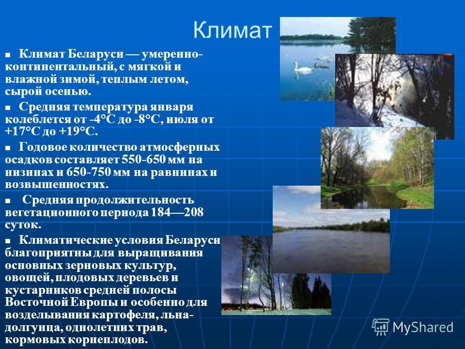Климат Климат Беларуси умеренно- континентальный, с мягкой и влажной зимой, теплым летом, сырой осенью. Средняя температура января колеблется от -4°С до -8°С, июля от +17°С до +19°С. Годовое количество атмосферных осадков составляет 550-650 мм на низ