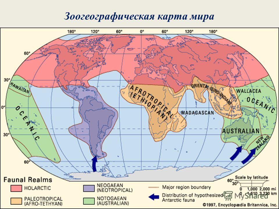 Зоогеографическая карта мира
