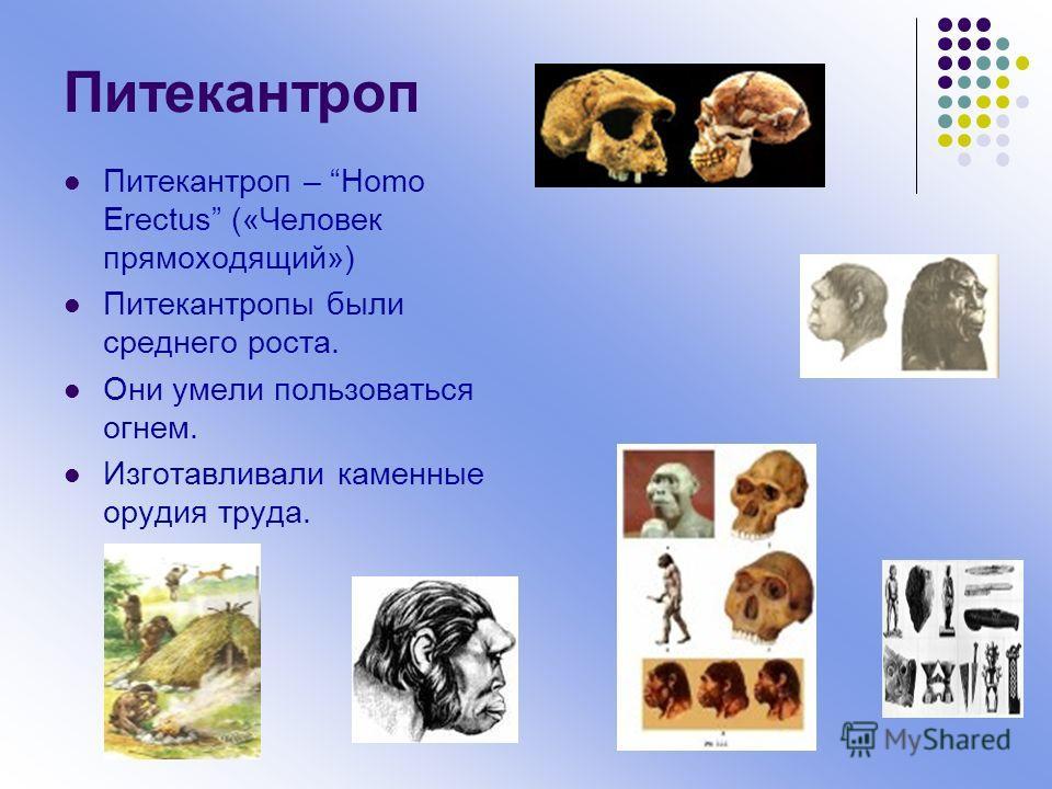 где найдены самые древнейшие останки человека
