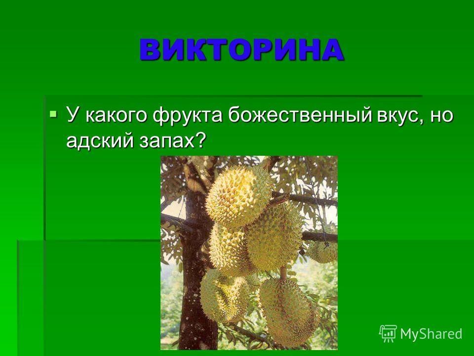 Рамбутан. Плоды округлые или овальные, размером 36 см, растут гроздьями до 30 штук на вечнозелёных деревьях высотой до 25 метров с широкой раскидистой кроной. По мере созревания меняют окраску с зелёной на жёлто- оранжевую, а затем ярко-красную. Покр