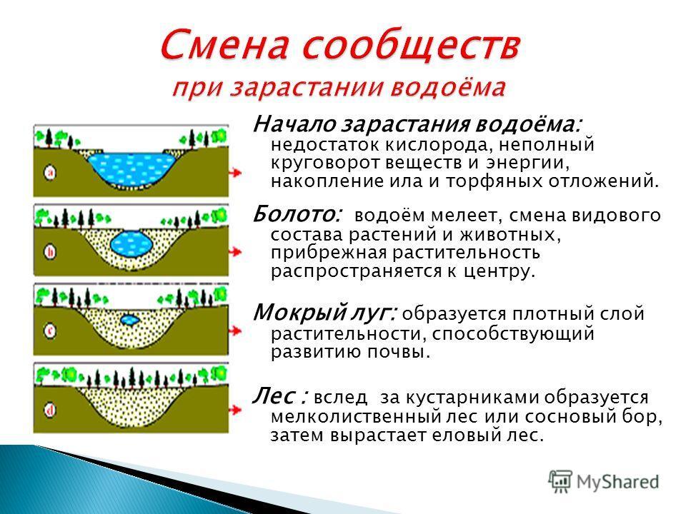 Начало зарастания водоёма: недостаток кислорода, неполный круговорот веществ и энергии, накопление ила и торфяных отложений. Болото: водоём мелеет, смена видового состава растений и животных, прибрежная растительность распространяется к центру. Мокры