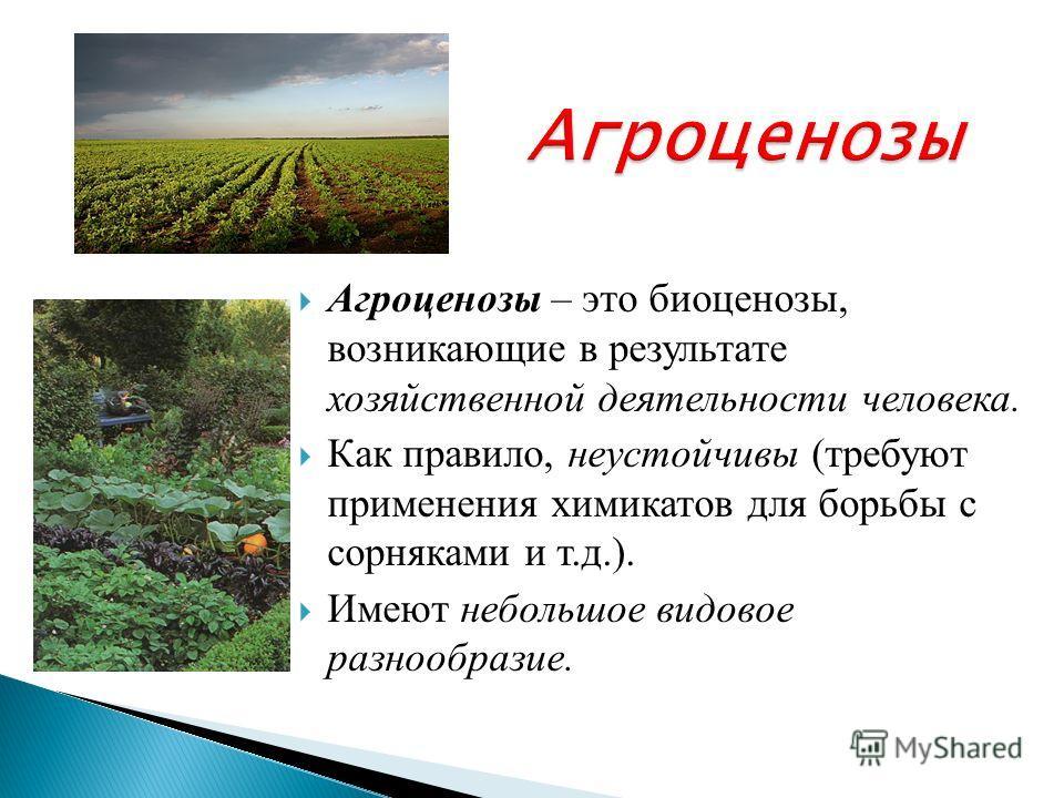 Агроценозы Агроценозы – это биоценозы, возникающие в результате хозяйственной деятельности человека. Как правило, неустойчивы (требуют применения химикатов для борьбы с сорняками и т.д.). Имеют небольшое видовое разнообразие.