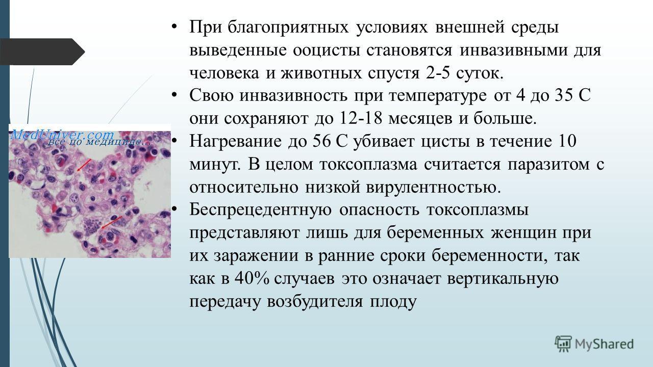 При благоприятных условиях внешней среды выведенные ооцисты становятся инвазивными для человека и животных спустя 2-5 суток. Свою инвазивность при температуре от 4 до 35 С они сохраняют до 12-18 месяцев и больше. Нагревание до 56 С убивает цисты в те