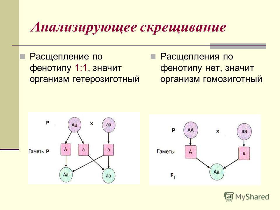Анализирующее скрещивание Расщепление по фенотипу 1:1, значит организм гетерозиготный Расщепления по фенотипу нет, значит организм гомозиготный