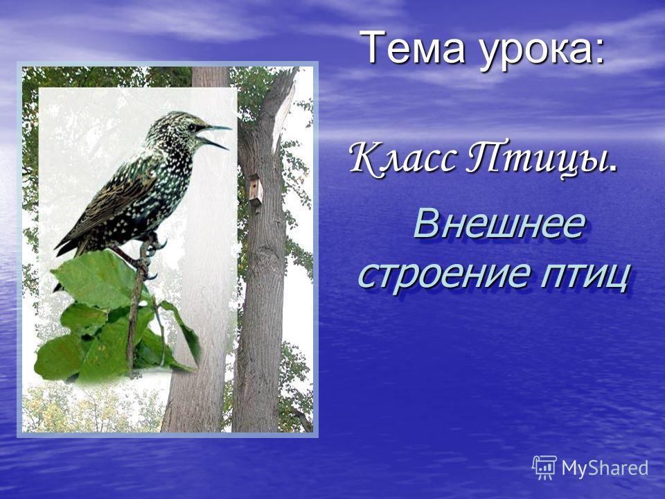 Тема урока: Класс Птицы. В нешнее строение птиц В нешнее строение птиц