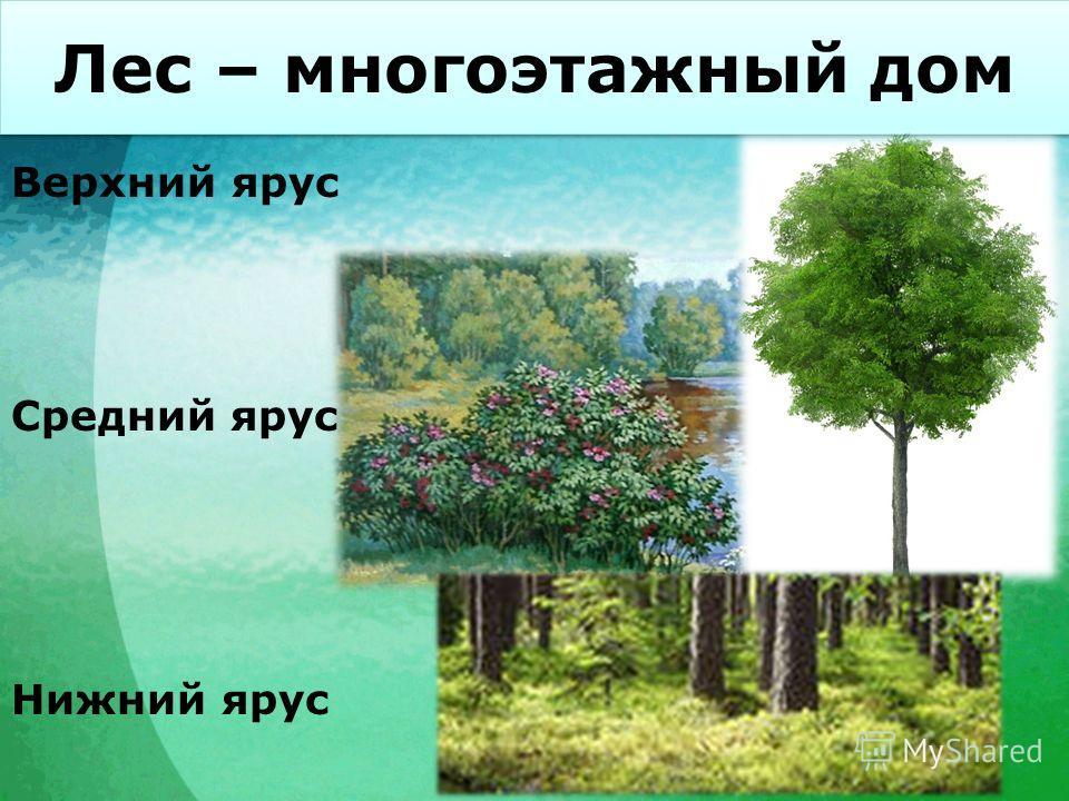 Лес – многоэтажный дом Верхний ярус Нижний ярус Средний ярус