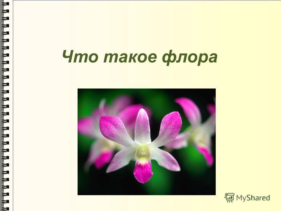 Что такое флора