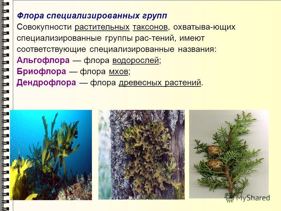 Флора специализированных групп Совокупности растительных таксонов, охватыва-ющих специализированные группы рас-тений, имеют соответствующие специализированные названия: Альгофлора флора водорослей; Бриофлора флора мхов; Дендрофлора флора древесных ра