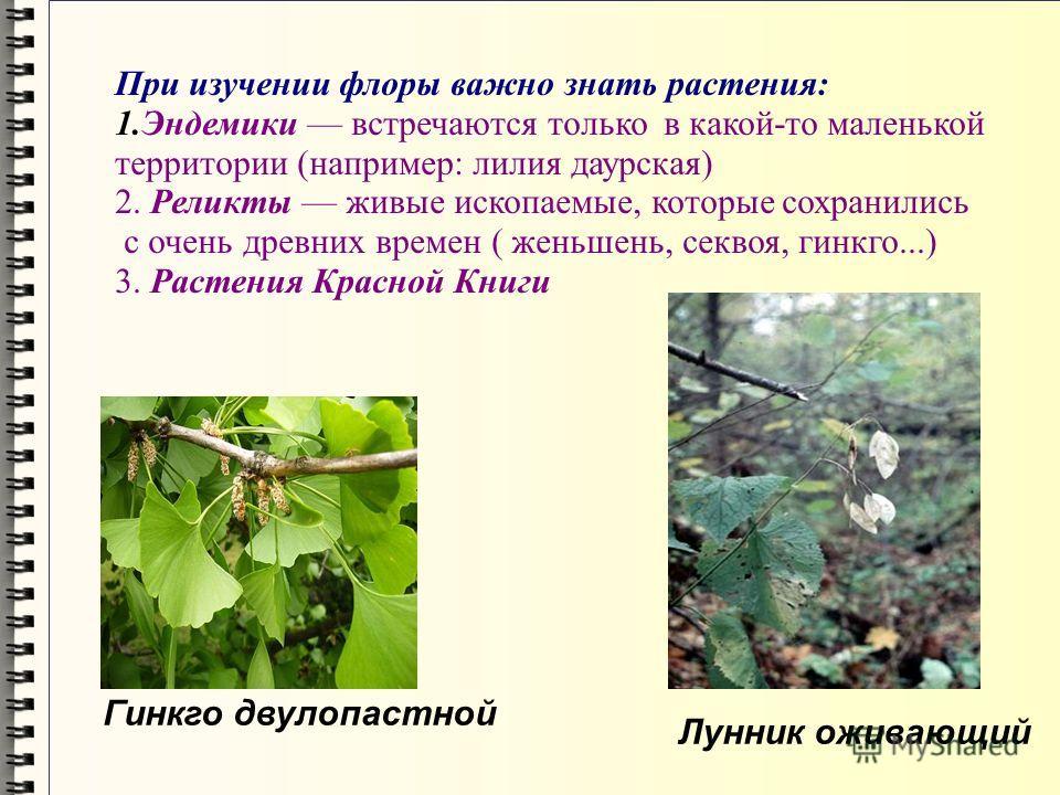 Гинкго двулопастной Лунник оживающий При изучении флоры важно знать растения: 1.Эндемики встречаются только в какой-то маленькой территории (например: лилия даурская) 2. Реликты живые ископаемые, которые сохранились с очень древних времен ( женьшень,