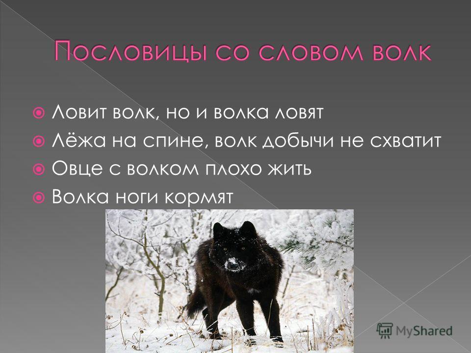 Ловит волк, но и волка ловят Лёжа на спине, волк добычи не схватит Овце с волком плохо жить Волка ноги кормят