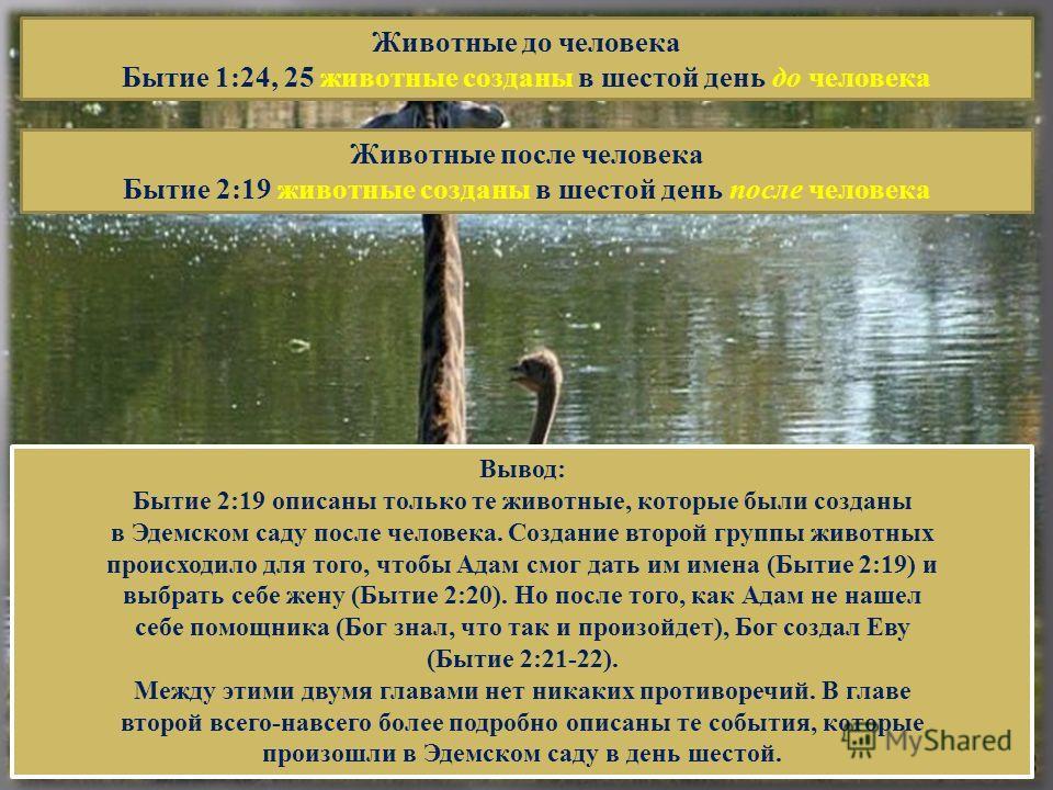 Животные до человека Бытие 1:24, 25 животные созданы в шестой день до человека Животные после человека Бытие 2:19 животные созданы в шестой день после человека Вывод: Бытие 2:19 описаны только те животные, которые были созданы в Эдемском саду после ч