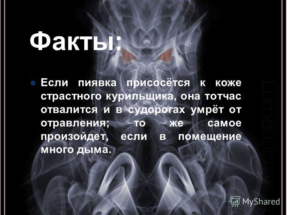 Факты: Если пиявка присосётся к коже страстного курильщика, она тотчас отвалится и в судорогах умрёт от отравления; то же самое произойдет, если в помещение много дыма.
