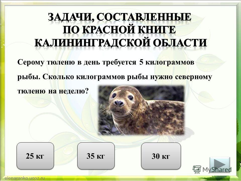 Серому тюленю в день требуется 5 килограммов рыбы. Сколько килограммов рыбы нужно северному тюленю на неделю? 25 кг 35 кг 30 кг