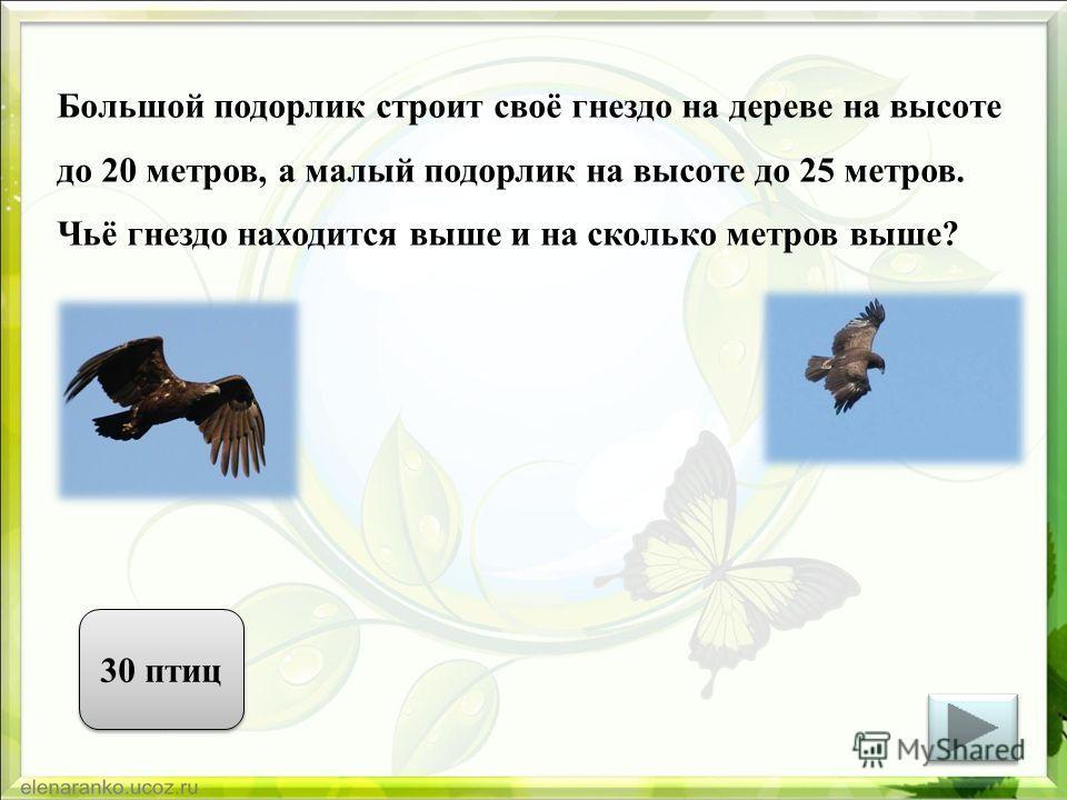 Большой подорлик строит своё гнездо на дереве на высоте до 20 метров, а малый подорлик на высоте до 25 метров. Чьё гнездо находится выше и на сколько метров выше? 30 птиц