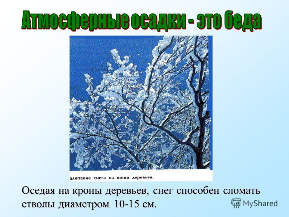 Оседая на кроны деревьев, снег способен сломать стволы диаметром 10-15 см.