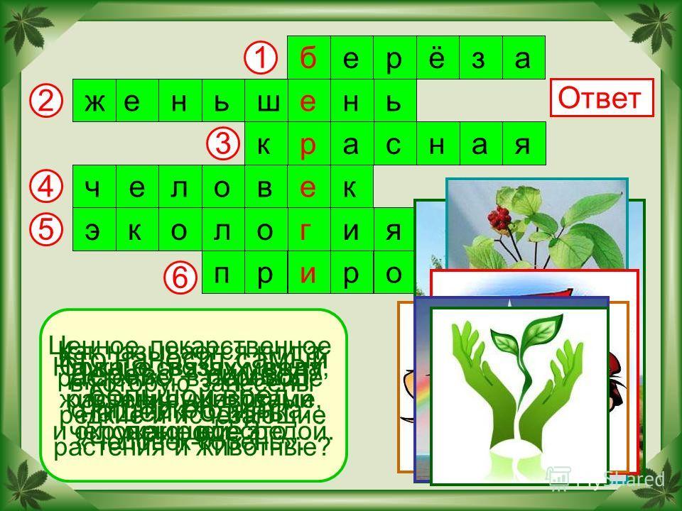 2 6 5 4 3 1 Ответ Дерево – символ нашей Родины. берёза женьшень красная человек экология природа Ценное лекарственное растение, в переводе с китайского языка: «Человек-корень». Как называется книга, в которую занесены редкие и исчезающие растения и ж