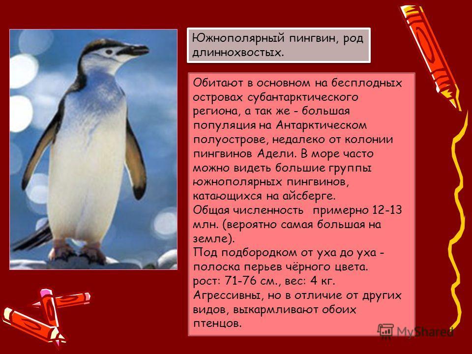 Обитают в основном на бесплодных островах субантарктического региона, а так же - большая популяция на Антарктическом полуострове, недалеко от колонии пингвинов Адели. В море часто можно видеть большие группы южнополярных пингвинов, катающихся на айсб