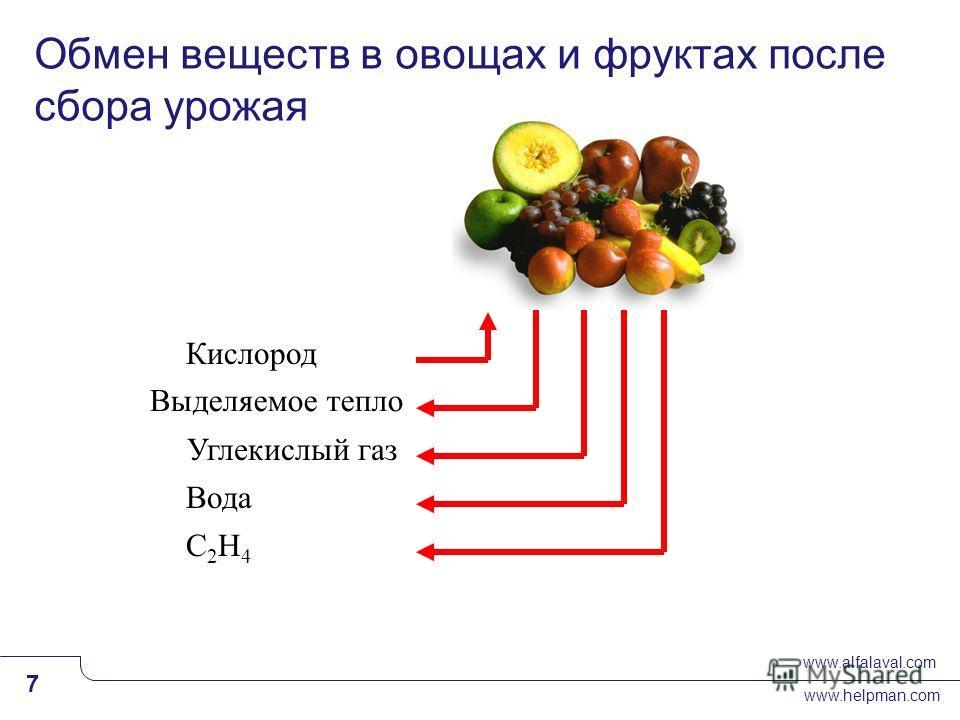 www.alfalaval.com www.helpman.com 7 Slide 7 Обмен веществ в овощах и фруктах после сбора урожая Кислород Выделяемое тепло Углекислый газ Вода C2H4C2H4