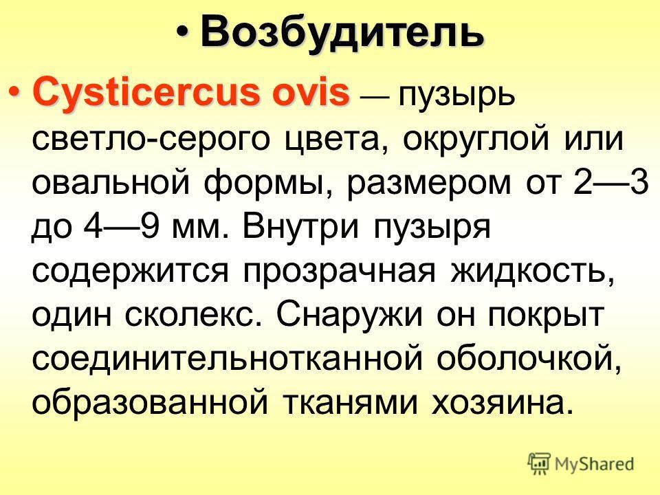 ВозбудительВозбудитель Cysticercus ovisCysticercus ovis пузырь светло-серого цвета, округлой или овальной формы, размером от 23 до 49 мм. Внутри пузыря содержится прозрачная жидкость, один сколекс. Снаружи он покрыт соединительнотканной оболочкой, об