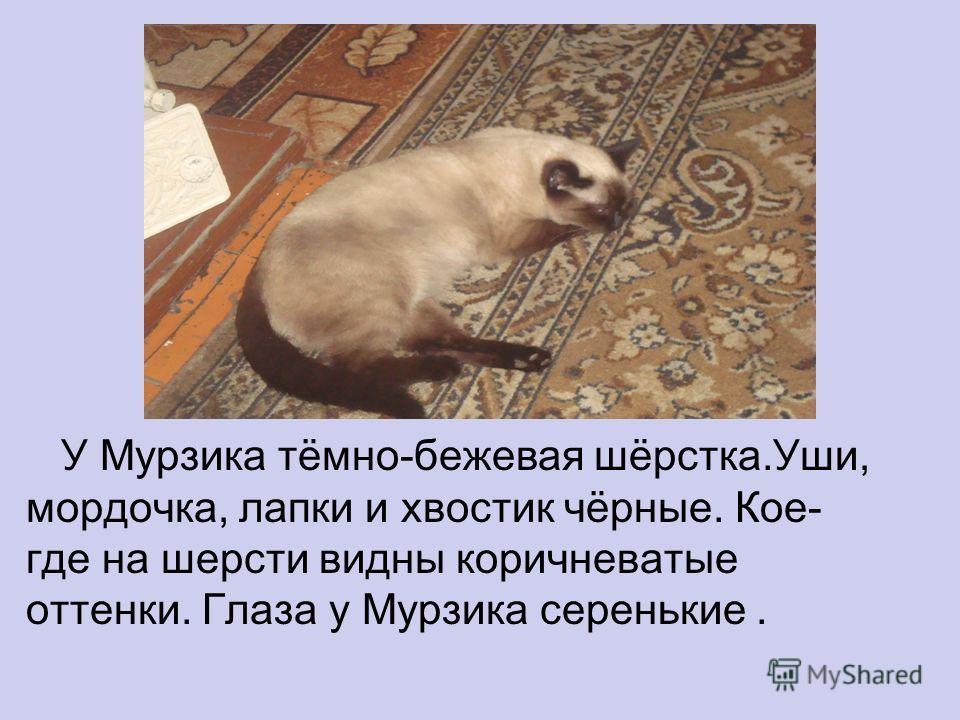 У Мурзика тёмно-бежевая шёрстка.Уши, мордочка, лапки и хвостик чёрные. Кое- где на шерсти видны коричневатые оттенки. Глаза у Мурзика серенькие.