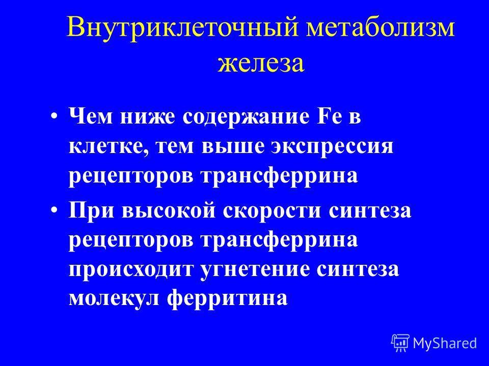 Внутриклеточный метаболизм железа Чем ниже содержание Fe в клетке, тем выше экспрессия рецепторов трансферрина При высокой скорости синтеза рецепторов трансферрина происходит угнетение синтеза молекул ферритина