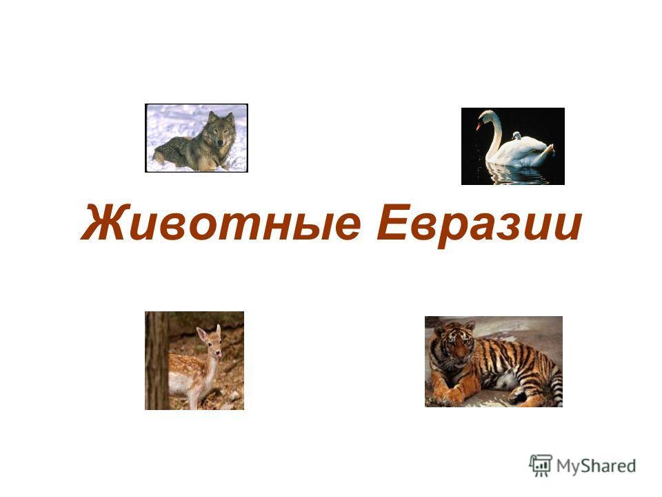 Животные Евразии