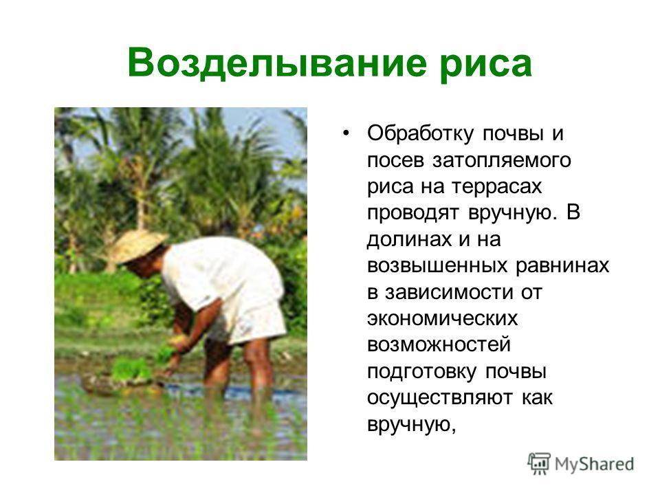 Возделывание риса Обработку почвы и посев затопляемого риса на террасах проводят вручную. В долинах и на возвышенных равнинах в зависимости от экономических возможностей подготовку почвы осуществляют как вручную,