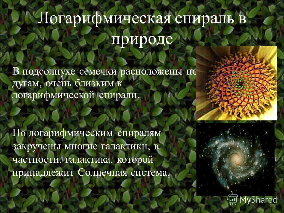 Логарифмическая спираль в природе Например, раковины многих моллюсков закручены именно по этой спирали, чтобы не сильно вытягиваться в длину. Также логарифмическую спираль можно увидеть в рогах архара (горного козла). В природе логарифмическая спирал